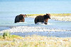Boar_River_Confrontation_August_2020_Katmai_Alaska_0016