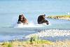 Boar_River_Confrontation_August_2020_Katmai_Alaska_0007