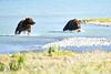 Boar_River_Confrontation_August_2020_Katmai_Alaska_0012