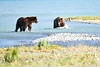 Boar_River_Confrontation_August_2020_Katmai_Alaska_0013