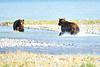 Boar_River_Confrontation_August_2020_Katmai_Alaska_0001