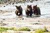 Brown_Bear_Cubs_Geographic_Harbor_August_2020_Katmai_Alaska_0002