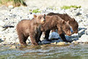 Brown_Bear_Cubs_Geographic_Harbor_August_2020_Katmai_Alaska_0008