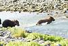 Brown_Bear_Cubs_Geographic_Harbor_August_2020_Katmai_Alaska_0004