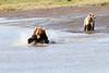 Mother_Brown_Bear_2nd_Year_Cubs_Hallo_Bay_August_2020_Katmai_Alaska_0016