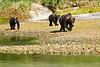 Mother_Brown_Bear_2nd_Year_Cubs_August_2020_Katmai_Alaska_0015