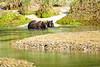 Mother_Brown_Bear_2nd_Year_Cubs_August_2020_Katmai_Alaska_0007