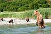 Mom_Triplett_Spring_Cubs_August_2020_Katmai_Alaska_0020