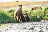 Mom_Triplett_Spring_Cubs_August_2020_Katmai_Alaska_0013