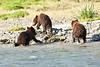 Mom_Triplett_Spring_Cubs_August_2020_Katmai_Alaska_0003