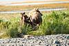 Mom_Triplett_Spring_Cubs_August_2020_Katmai_Alaska_0010