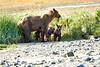 Mom_Triplett_Spring_Cubs_August_2020_Katmai_Alaska_0012