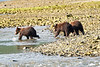 Mom_Triplett_Spring_Cubs_August_2020_Katmai_Alaska_0006