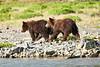 Mom_Triplett_Spring_Cubs_August_2020_Katmai_Alaska_0004