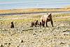 Mom_Triplett_Spring_Cubs_August_2020_Katmai_Alaska_0018