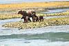 Mom_Triplett_Spring_Cubs_August_2020_Katmai_Alaska_0016