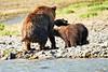 Mom_Triplett_Spring_Cubs_August_2020_Katmai_Alaska_0005