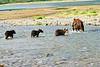 Mom_Triplett_Spring_Cubs_August_2020_Katmai_Alaska_0001