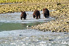 Mom_Triplett_Spring_Cubs_August_2020_Katmai_Alaska_0007