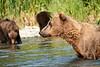 Mom_Triplett_Spring_Cubs_August_2020_Katmai_Alaska_0009