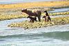 Mom_Triplett_Spring_Cubs_August_2020_Katmai_Alaska_0015
