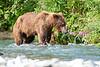 Mom_Twin_Spring_Cubs_Fishing_August_2020_Katmai_Alaska_0018
