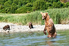 Mom_Twin_Spring_Cubs_Fishing_August_2020_Katmai_Alaska_0002