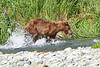 Mom_Twin_Spring_Cubs_Fishing_August_2020_Katmai_Alaska_0020