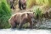 Mom_Twin_Spring_Cubs_Fishing_August_2020_Katmai_Alaska_0011