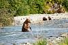 Mom_Twin_Spring_Cubs_Fishing_August_2020_Katmai_Alaska_0004