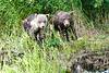Mom_Twin_Spring_Cubs_Geographic_Harbor_August_2020_Katmai_Alaska_0016