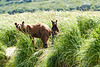 Mom_Twin_Spring_Cubs_Geographic_Harbor_August_2020_Katmai_Alaska_0008