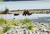Mom_Twin_Spring_Cubs_Geographic_Harbor_August_2020_Katmai_Alaska_0012