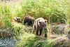 Mom_Twin_Spring_Cubs_Geographic_Harbor_August_2020_Katmai_Alaska_0013