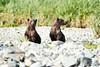 Mom_Twin_Spring_Cubs_Geographic_Harbor_August_2020_Katmai_Alaska_0004