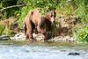 Mom_Twin_Spring_Cubs_Geographic_Harbor_August_2020_Katmai_Alaska_0020