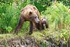 Mom_Twin_Spring_Cubs_Geographic_Harbor_August_2020_Katmai_Alaska_0005