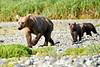 Mom_Twin_Spring_Cubs_Geographic_Harbor_August_2020_Katmai_Alaska_0001