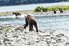 Mom_Twin_Spring_Cubs_Geographic_Harbor_August_2020_Katmai_Alaska_0010
