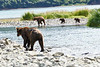 Mom_Twin_Spring_Cubs_Geographic_Harbor_August_2020_Katmai_Alaska_0009