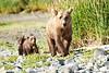 Mom_Twin_Spring_Cubs_Geographic_Harbor_August_2020_Katmai_Alaska_0002