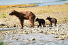 Mom_Twin_Spring_Cubs_Geographic_Harbor_August_2020_Katmai_Alaska_0003