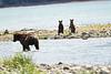 Mom_Twin_Spring_Cubs_Geographic_Harbor_August_2020_Katmai_Alaska_0011