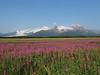 Hallo_Bay_August_2020_Katmai_Alaska_0030