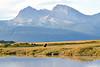 Hallo_Bay_August_2020_Katmai_Alaska_0010