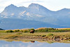 Hallo_Bay_August_2020_Katmai_Alaska_0011