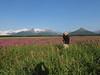 Hallo_Bay_August_2020_Katmai_Alaska_0033