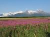 Hallo_Bay_August_2020_Katmai_Alaska_0028
