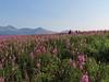 Hallo_Bay_August_2020_Katmai_Alaska_0037