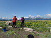 Hallo_Bay_August_2020_Katmai_Alaska_0060